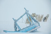 Dogsledging and whale watching, Greenland